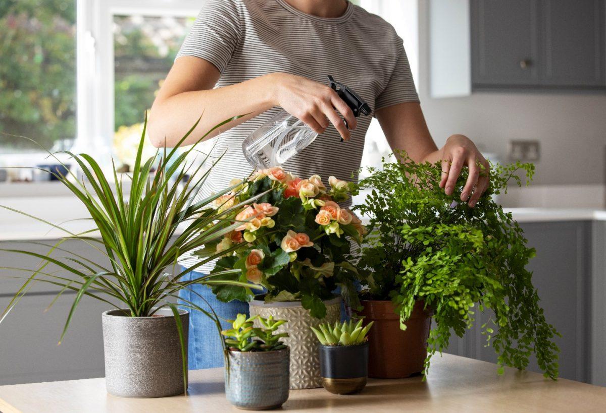 Τα 10 καλύτερα φυτά εσωτερικού χώρου